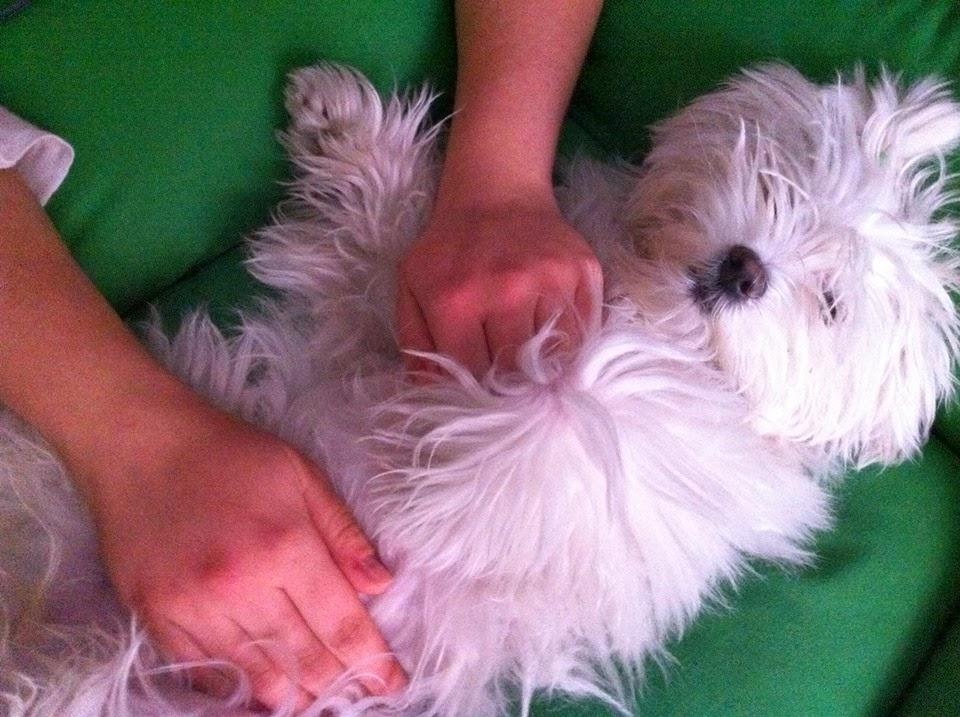 Reiki para animales y mascotas