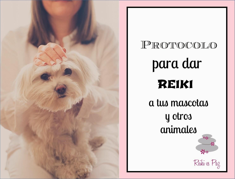 Protocolo para dar una sesión de Reiki a tu mascota (y demás animales)